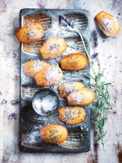 lavender-spiced honey madeleines